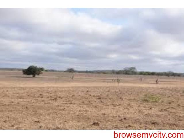 Non Agricultural Land for Sale AT Ambli (Dholera SIR)